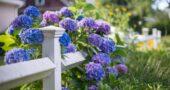 Bahçe Dekorasyonunuzu 21 Farklı Bahçe Çiçekleri İle Oluşturun