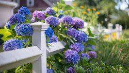 Bahçe Çiçekleri İle Cennetten Bir Köşe