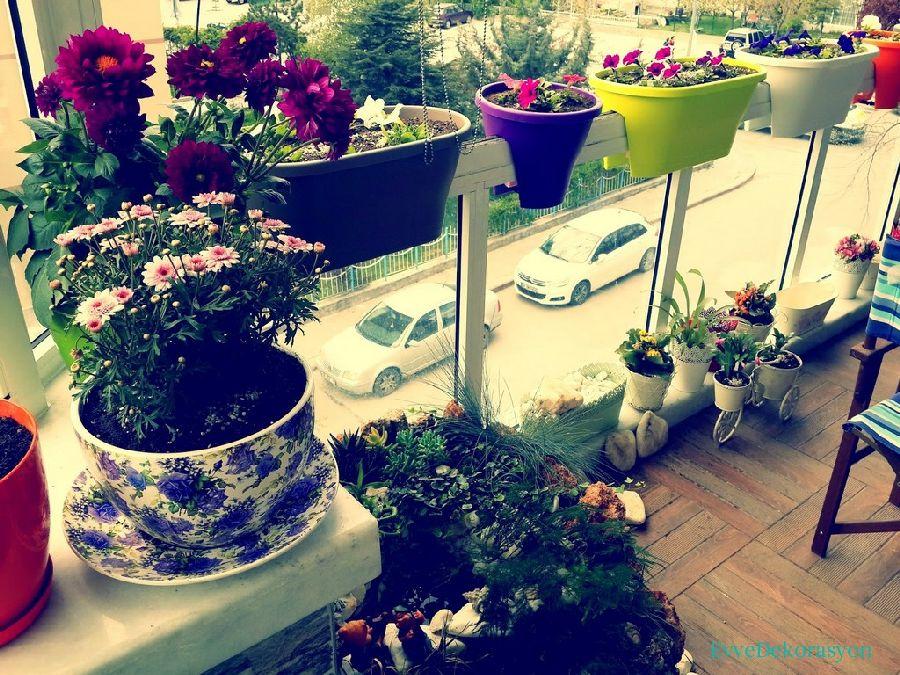 Balkon Sus Bitkileri Ev Dekorasyonu